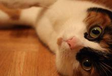 Neighbourhood kitten
